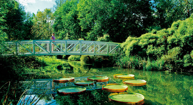 Kanapaha Botanical Gardens bridge
