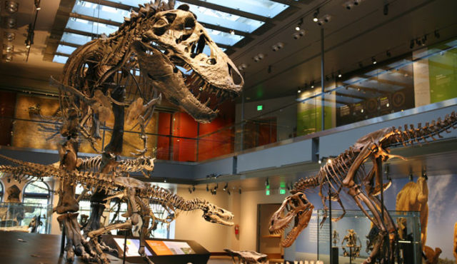 next_project_Dino_Hall_slide_01