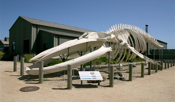 whale_skeleton_at_seymour_marine_discovery_center_-_vscc_and_mark_barnes